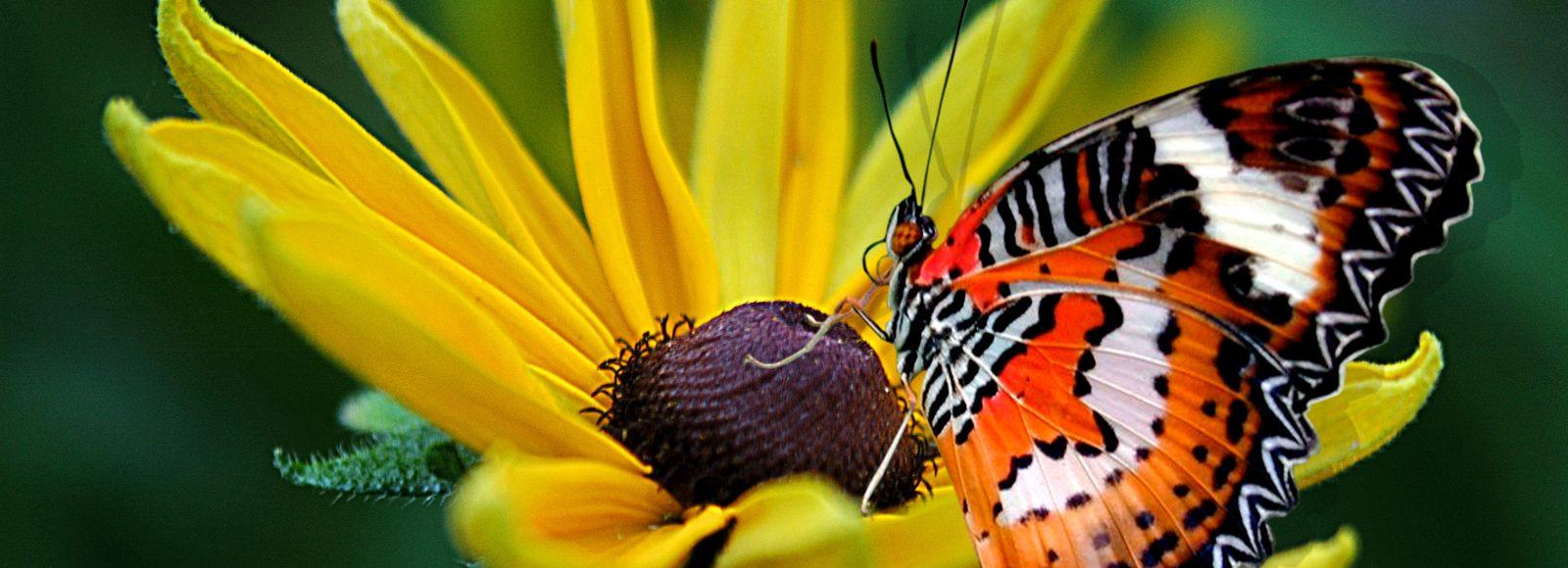 Botanical Gardens near Danville CA