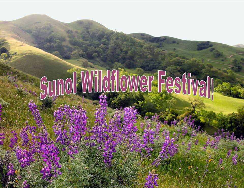 Wildflower Festival, Sunol, CA.